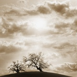 Trees and Cloudy Sky Photographic Print by  JoSon