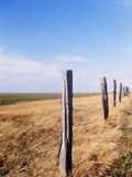 Wooden fence on meadow, St Peter-Ording, Germany Photographic Print by Darius Ramazani