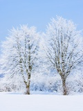Trees in Winter Photographic Print by Frank Krahmer