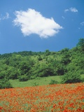 Poppy meadow in landscape Photographic Print by Rolf W. Hapke