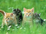Four Kittens Photographic Print by Frank Lukasseck