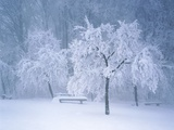 Landscape with bench in winter Photographic Print by Fridmar Damm
