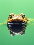 Frog in the water Photographic Print by Herbert Kehrer