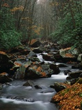 Stream Running Through Forest Photographic Print by Jay Dickman
