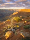Rocks and Shrubs at the Grand Canyon Photographic Print by George H.H. Huey