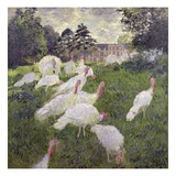 Turkeys Giclee Print by Claude Monet
