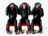 Three chimpanzees Fotografisk tryk af Holger Scheibe