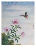 Chinese Watercolor of a Moth and Pink Carnations Giclee Print