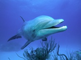 Bottlenose Dolphin Photographic Print by Stephen Frink