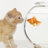 Kitten and Goldfish Looking at Each Other Fotografie-Druck