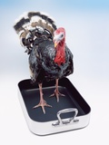 Turkey Standing in Cooking Pan Photographie par Peter Dazeley