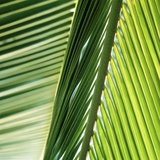 Frond Photographic Print by Ingolf Hatz
