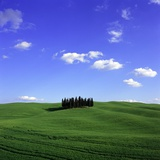 Cypress trees, Tuscany, Italy (near Torrenieri) Photographic Print by Guenter Rossenbach