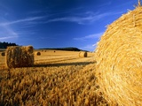 Field with bales of hay Photographic Print by Frank Lukasseck