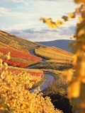 Vineyards in autumn in Esslingen/Neckar Photographic Print by Herbert Kehrer