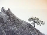 Pine Tree Growing on Mountain Photographic Print by Frank Lukasseck
