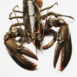 Lobster Photographic Print by Rainer Holz
