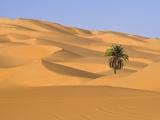 Palm Tree in Desert Fotografisk tryk af Frank Lukasseck