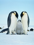 Two emperor penguins with fledgling Photographic Print by Hans Reinhard