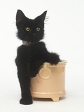 Black Kitten Sitting in Plant Pot Photographic Print by Pat Doyle