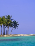 Palm Trees on Pelican Island Photographic Print by Blaine Harrington