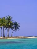 Palm Trees on Pelican Island Photographic Print by Blaine Harrington