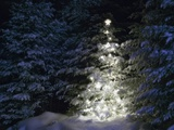 Illuminated Christmas Tree in Snow Photographic Print by Larry Williams