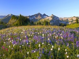 Wildflowers and Tatoosh Range Photographic Print by Craig Tuttle