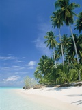 Beach with palms and clear sea, Malaysia, Mabul Island Photographic Print by Sergio Pitamitz