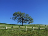 Tree and Fence in Pasture Photographic Print by Craig Aurness