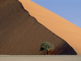 Acacia at the hillside of a dune in Namib Naukluft Park Photographic Print by Frank Lukasseck