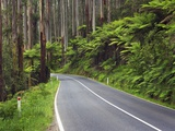 Road in Australian Rainforest Photographic Print by Frank Krahmer