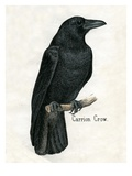 Carrion Crow Giclee Print
