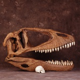 Carcharodontosaurus Skull with Human Skull Photographic Print by Louie Psihoyos