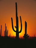 Sun Setting Behind Cacti Photographic Print