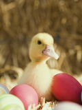 Duckling with Easter Eggs Photographic Print by Ada Summer