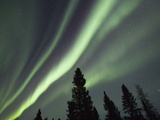 Northern Lights over Boreal Forest Photographic Print by Frank Lukasseck