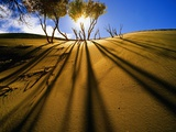 Poplar Trees on Sand Dunes in the Tengger Desert Photographic Print by Wong Adam