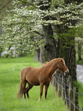Horse Standing by Fence Photographic Print by William Manning