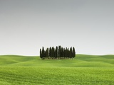 Cypress Grove in Field Photographic Print by Sergio Pitamitz