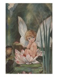 Illustration of Fairy on Water Lily by Fred Spurgin Giclee-vedos tekijänä Alexandra Day