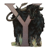 Y Is For Yak Lámina giclée