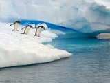 Gentoo Penguins Contemplating Jumping into Gerlache Strait Photographic Print by John Eastcott & Yva Momatiuk