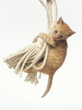 Orange Kitten Hanging from Tassel Photographic Print by Pat Doyle
