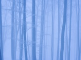 Beech Forest in Winter Photographic Print by Frank Krahmer