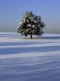 Tree in snow covered landscape Photographic Print by Scott Barrow