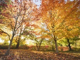 Trees in Autumn Photographic Print by Robert Llewellyn
