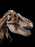 Head of Tyrannosaurus Rex Photographic Print by Louie Psihoyos