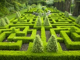 Knot Garden Photographic Print by Mark Bolton