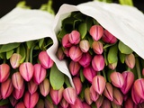 Pink Tulips Wrapped in Paper Photographic Print by Bruno Ehrs